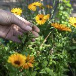 Bloemen van de Groene Buurvrouw